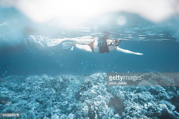 scuba diving and exploring the sea life