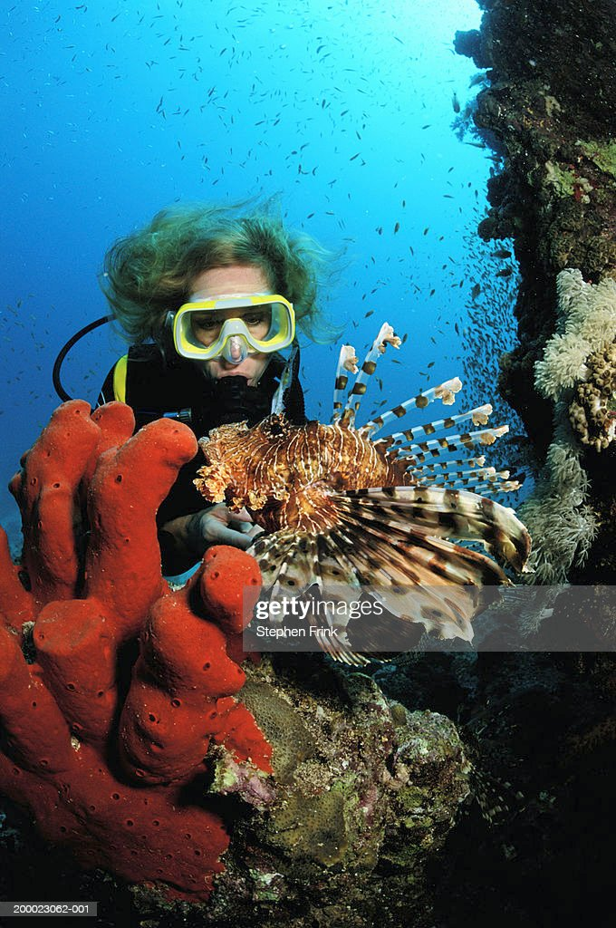 Scubadiver looking at Lionfish (Pterois volitans)  underwater view : Stock Photo