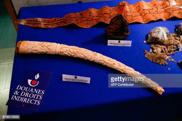A sculpted elephant tusk and a bottle containing a king cobra and a scorpion seized by the French Customs are pictured at RoissyCharles de Gaulle...