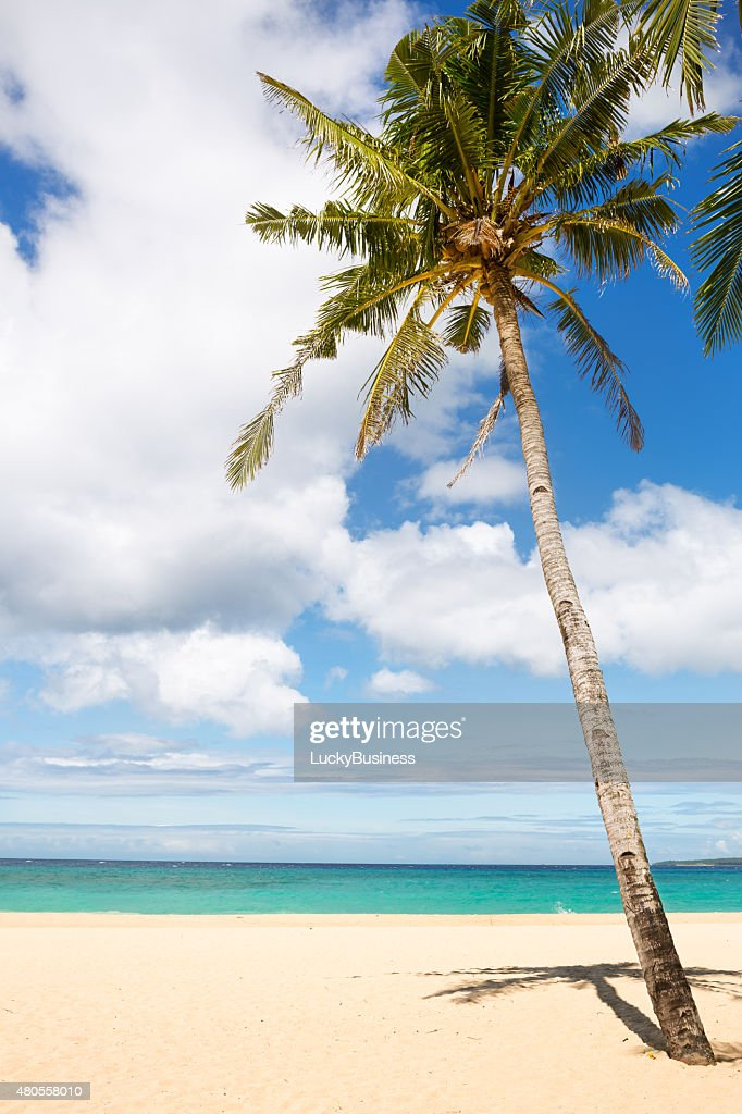 sea and coconut palm : Stock Photo