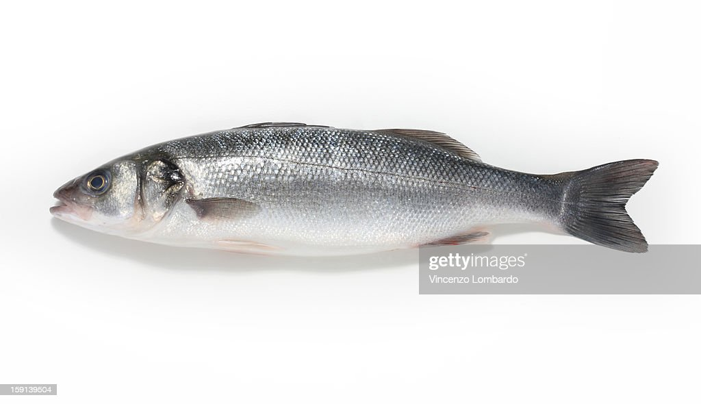 Sea bass on a white background : Stock Photo