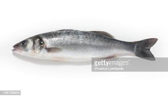 Sea bass on a white background