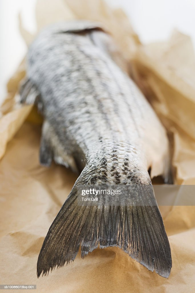 Sea bass on parchment paper, close-up : Stock Photo