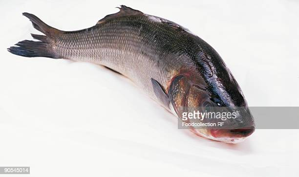 Sea bass on white background, close up