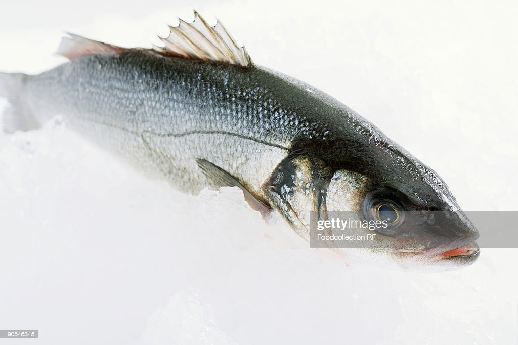 Sea Bass on white background, close up : Stock Photo