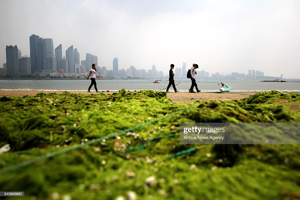 Sea beach is covered by green algae in Qingdao City, east China's Shandong Province. Green algae, or enteromorpha prolifera, struck the coast of Qingdao on Friday.