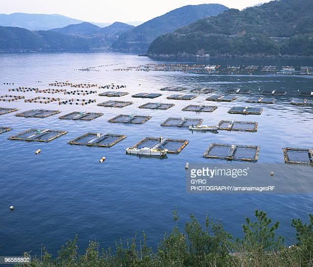 Sea bream fish farm, Ehime Prefecture, Shikoku, Japan