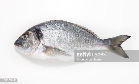 Sea Bream on a white background