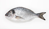 Sea Bream on a white background
