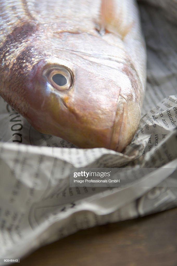 Sea bream on newspaper, close up : Stock Photo