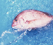 Sea bream on water