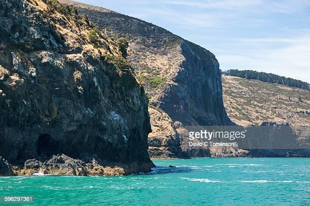 Sea cliffs at Akaroa Head, Banks Peninsula, Akaroa
