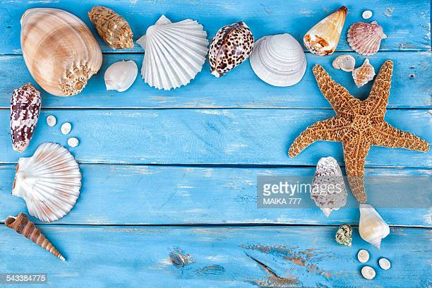 Sea creatures background blue wooden and copyspace