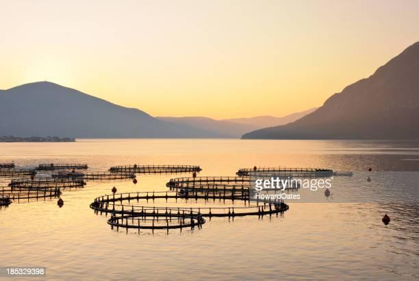 Sea fish farm in Greece at sunrise