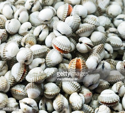Sea food raw Surf clam background : Stock Photo