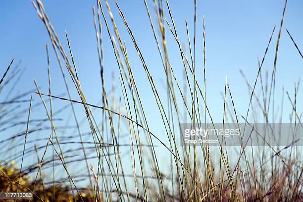 Sea Grass and Sky