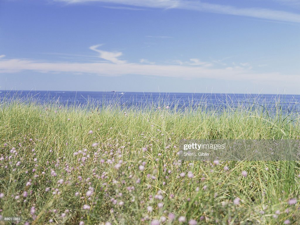 sea grass landscape stock photo getty images