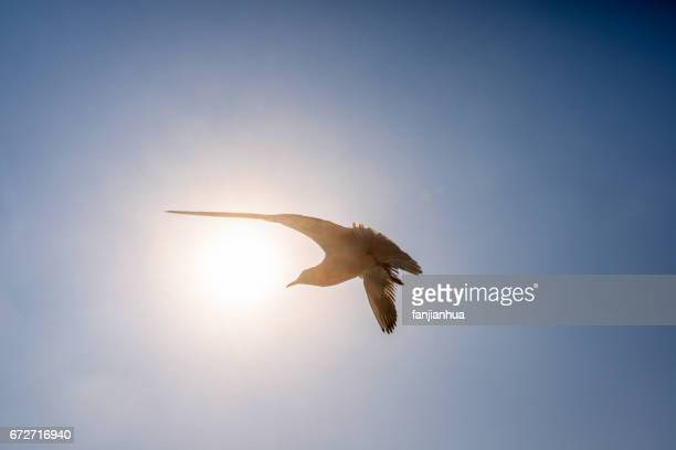 Sea guls in flight against blue sky