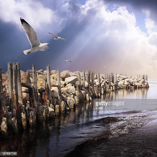 、海の風景と嵐の空とかもめ