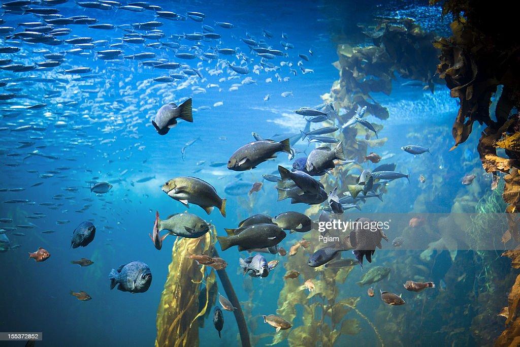 Sea life and fish underwater