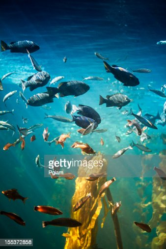 Sea life and fish underwater