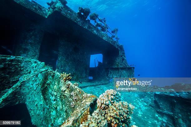 anemone di mare e pesci pagliaccio naufragio immersioni vita