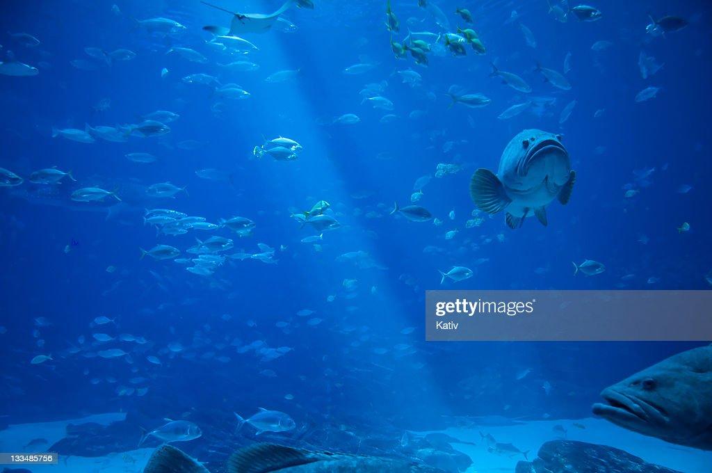 Sea Life : Stock Photo
