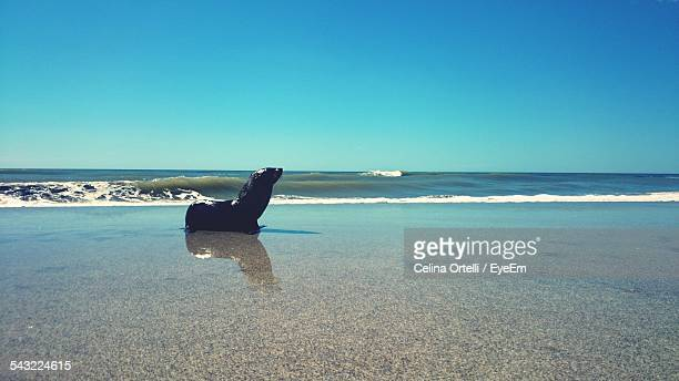 Sea Lion At Beach Against Clear Blue Sky