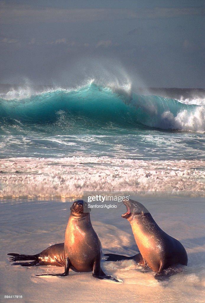 Sea lion companions