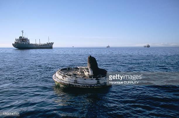 Sea lion in the Valparaiso port in Valparaiso Chile Sea Lion Scientific Name English Name Ornithoryhynchus anatinus Australian sea lion New Zealand...