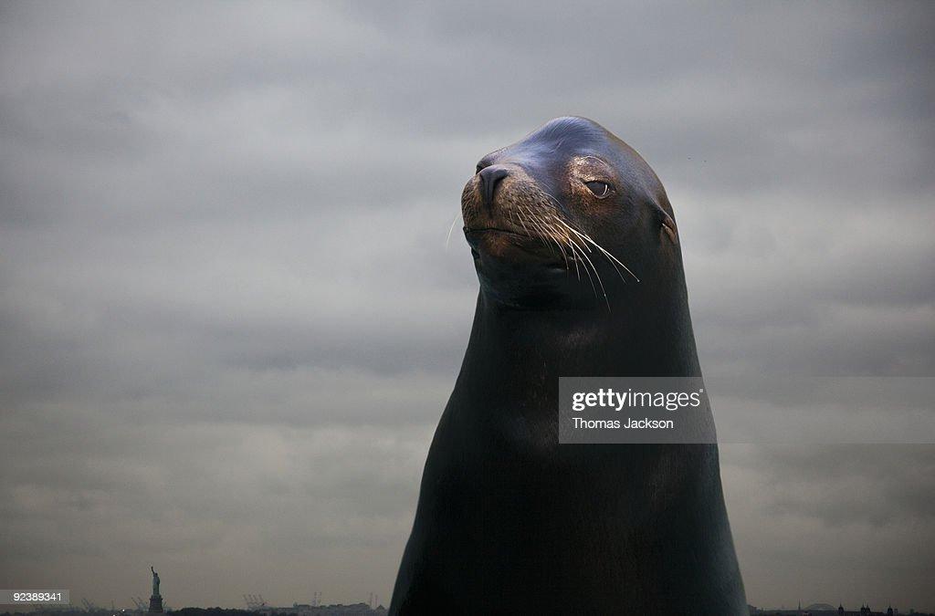 Sea lion, portrait : Stock Photo
