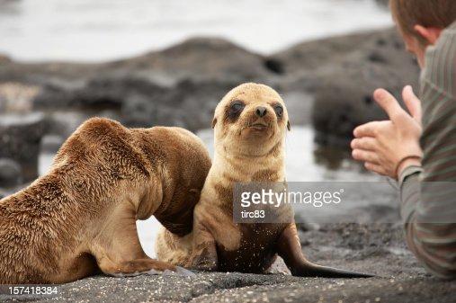Sea lion pups on Galapagos Islands