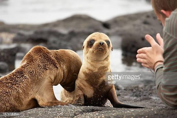 アシカ pups のガラパゴス諸島