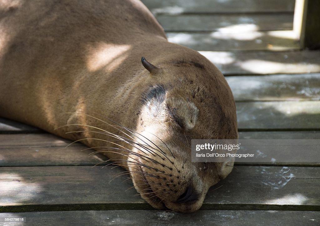 A sea lion sleppeng in Concha de Perla, Isabela Isle, Galapagos