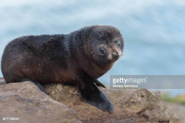 Sea Lion#2