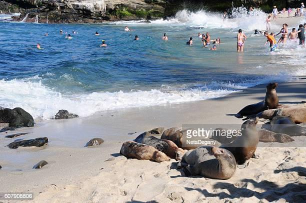 Sea Lions and people at La Jolla Cove, California
