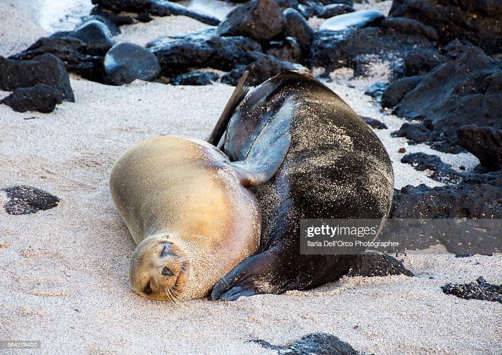 Sea lions in Playa Mann, San Cristobal Isle, Galapagos