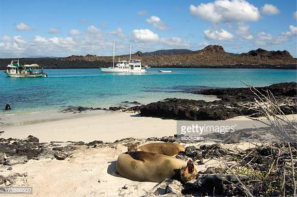 Sea lions relaxing on beach, Galapagos