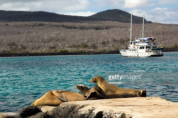 Sea lions taking sunbath at pier, Galapagos