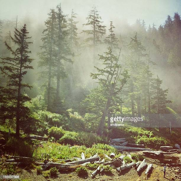 Sea mist in the forest