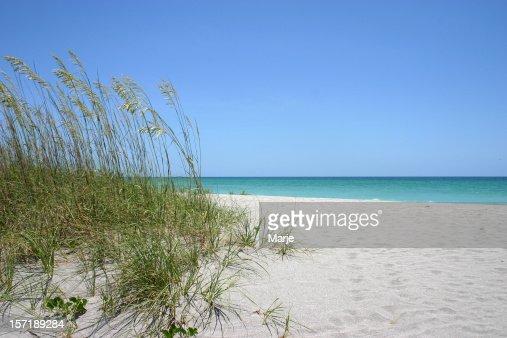 Sea oats on white sand beach and blue sky on background