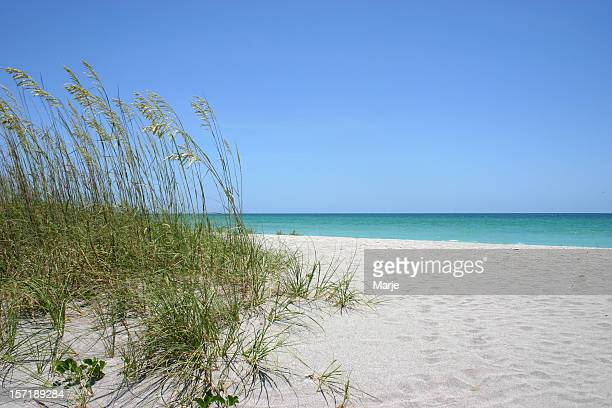 Sea oats on white sand beach and blue sky on background