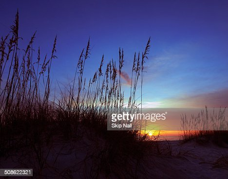 Sea oats silhouetted by a setting sun