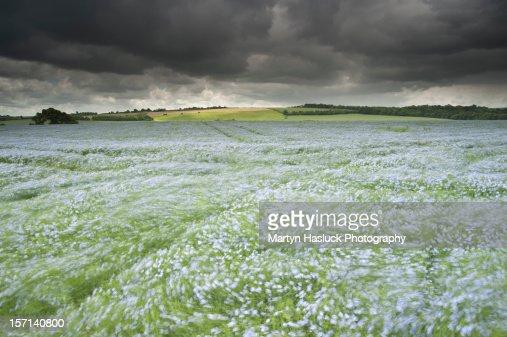 Sea of flowers : Stock Photo