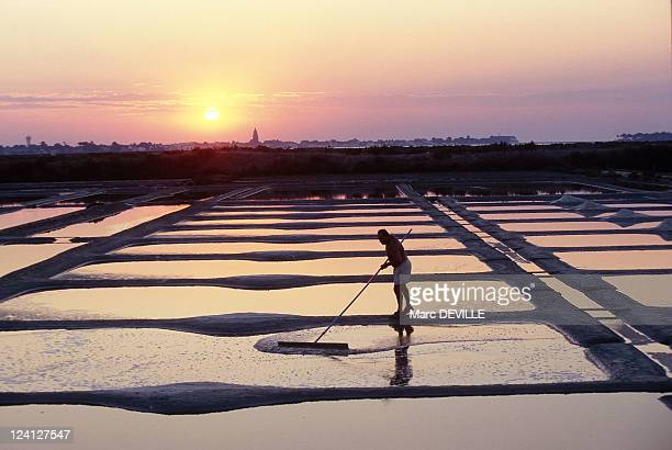 Sea Salt In Guerande France In September 1997 Harvesting the Salt
