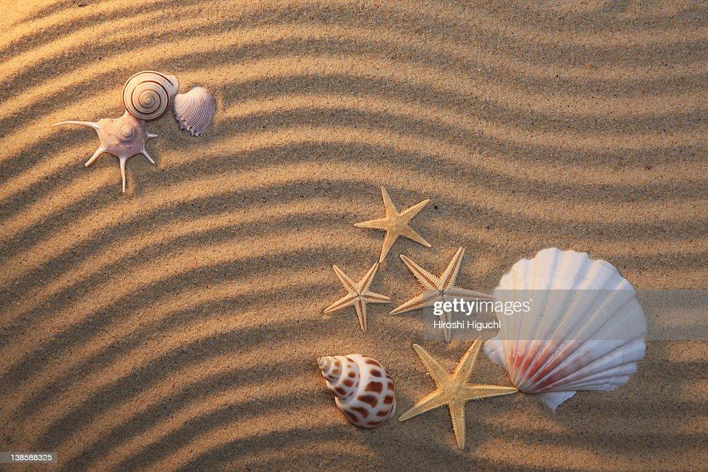 Sea shell and starfish : Stock Photo