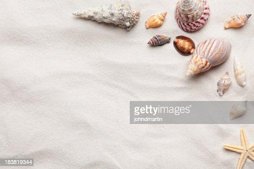 Sea Shell Copy Space Scene
