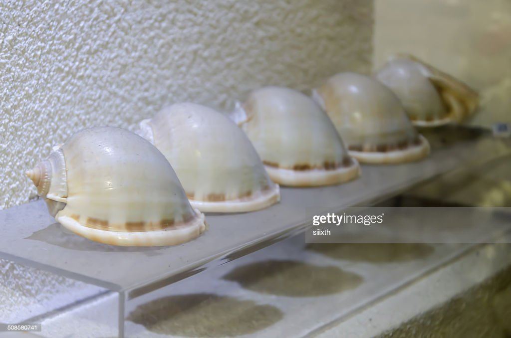 sea shell : Stock Photo