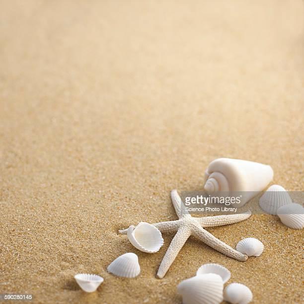 Sea shells and star fish on sand