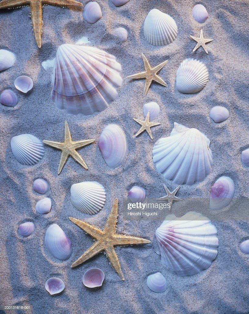 Sea shells and starfish arranged on sand : Stock Photo
